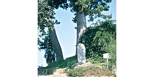 「末の松山」の写真