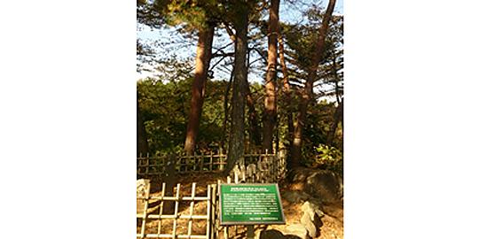 「西行戻しの松」の写真