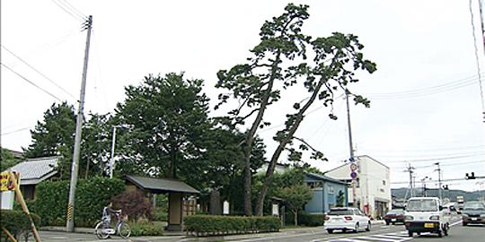 「二木の松」の写真